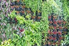 Różnorodny zielonych rośliien ścienna dekoracja Abstrakcjonistyczny piękny natury tło Obraz Stock