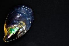 Różnorodnych kolorów Czarny Seashell na Czarnej i Błyszczącej tło powierzchni z Bezpłatną przestrzenią Kolory skorupa przypominaj Zdjęcia Stock