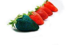 Różny niż spoczynkowej samotnej błękitnej truskawki Pojęcie dla genetycznie zmodyfikowanego jedzenia obraz stock
