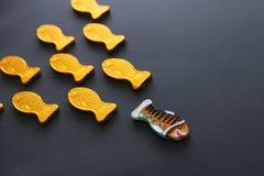 różny rybi pływacki naprzeciw sposobu identyczni ones Odwaga i sukcesu pojęcie Blackboard tło zdjęcie royalty free
