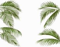 Różny w kształt palmy tropikalnych ciemnozielonych liściach Stylizowany kropka projekt pojedynczy białe tło ilustracja ilustracji