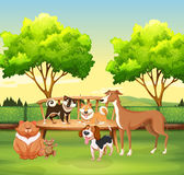Różny zwierzę domowe w parku jakby Fotografia Stock
