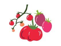 Różnych Pomidorowych rozmaitość Świeży warzywo, Organicznie Odżywczy Jarski jedzenie dla Zdrowej diety wektoru ilustracji ilustracja wektor