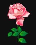 różową różę wektora Zdjęcia Stock