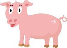 Różowa świnia Obraz Stock