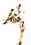Różowa żyrafa obraz stock