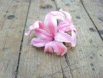 Różowa hiacyntowa wiosna kwitnie na drewnianym tle obrazy royalty free