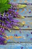 Różowa i purpurowa lupine kwiatów granica Urodziny, Macierzysty ` s dzień, walentynki ` s dzień, Marzec 8, Ślubna karta lub zapro Zdjęcia Stock