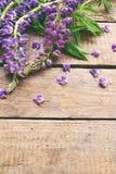 Różowa i purpurowa lupine kwiatów granica Urodziny, Macierzysty ` s dzień, walentynki ` s dzień, Marzec 8, Ślubna karta lub zapro Fotografia Stock