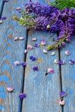 Różowa i purpurowa lupine kwiatów granica Urodziny, Macierzysty ` s dzień, walentynki ` s dzień, Marzec 8, Ślubna karta lub zapro Obraz Stock