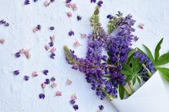 Różowa i purpurowa lupine kwiatów granica Urodziny, Mother& x27; s dzień, Valentine& x27; s dzień, Marzec 8, Ślubna karta lub zap Fotografia Stock