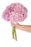 Różowa kwiat hortensja w ręce (ścinek ścieżka) Obrazy Stock
