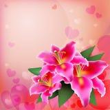 Różowa leluja na miękkim tle Fotografia Royalty Free