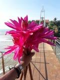 Różowa leluja na moście przy morzem zdjęcia royalty free