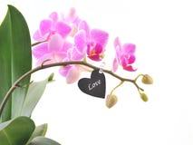 Różowa orchidea i czarny serce dla miłości Obrazy Stock