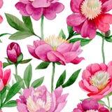 Różowa peonia Kwiecisty botaniczny kwiat Dziki lato liścia wildflower wzór ilustracji