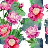 Różowa peonia Kwiecisty botaniczny kwiat Dziki lato liścia wildflower wzór royalty ilustracja