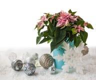 Różowa poinsecja w wigilię zima wakacje produktów mas Fotografia Stock