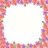 Różowa rama z menchii i purpur kwiatem zdjęcia stock