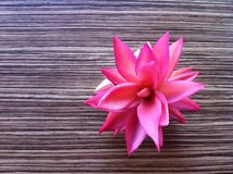 Różowa roślina na biurku Fotografia Stock