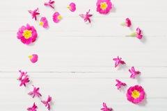 Różowa wiosna kwitnie na białym drewnianym tle Obraz Royalty Free