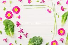 Różowa wiosna kwitnie na białym drewnianym tle Obraz Stock