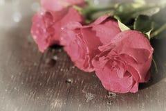 różowe ładne róże fotografia stock