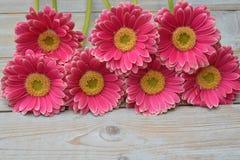 różowe żółte gerbera stokrotki w rabatowym rzędzie na popielatym starym drewnianym półki tle z pustą kopii przestrzenią Fotografia Royalty Free