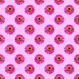 Różowe cynie kwitną bezszwowego deseniowego tło Fotografia Royalty Free