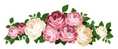 Różowe i biały róże. Wektorowa ilustracja. royalty ilustracja
