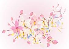 Różowe kasje lub życzyć drzewnego kwiatu na białym tle, wektorowa ilustracja Zdjęcia Stock