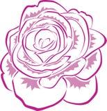 różowe linii róży ilustracja wektor