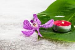 Różowe mokara orchidee i zielony liść z czerwoną herbatą zaświecają świeczkę dalej Obraz Royalty Free