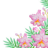 Różowe orchidee i zieleń liście Fotografia Royalty Free