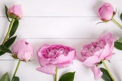 Różowe peonie kwitną na białym nieociosanym drewnianym tle z pustą przestrzenią dla teksta Mockup, odgórny widok obrazy royalty free