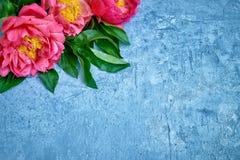 Różowe peonie na jaskrawym błękitnym tle Odbitkowa przestrzeń, odgórny widok Obraz Royalty Free