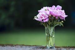 Różowe peonie w szklanej wazie z zielonym tłem zdjęcie royalty free