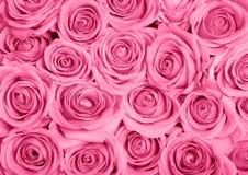 różowe róże Obrazy Royalty Free
