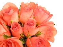 różowe róże zdjęcie royalty free