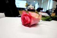 Różowe róże, dedykować festiwal miłość dzień miłość everyone fotografia stock