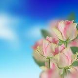 Różowe róże i niebieskie niebo Obraz Stock