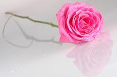 różowe róże kropli wody. Fotografia Royalty Free