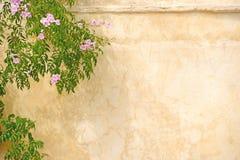 Różowe róże na ścianie Obrazy Stock