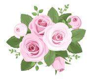 Różowe róże, rosebuds i liście. ilustracja wektor