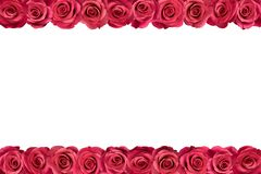 Różowe róże w rzędach 2 zdjęcie royalty free