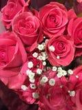 Różowe róże z dziecka ` s oddechem fotografia royalty free