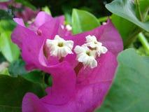 Różowego colour piękni kwiaty obrazy royalty free
