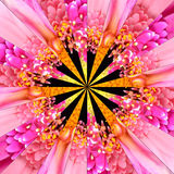Różowego kwiatu centrum kolażu Geometryczny wzór Obrazy Stock