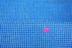 Różowego kwiatu pływacki basen Obrazy Royalty Free