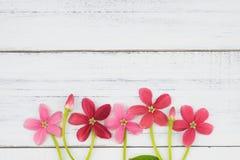 różowią czerwone kwiaty Obraz Stock